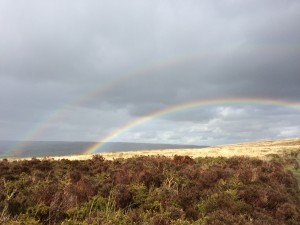 Exmoor events nightjars and rainbows