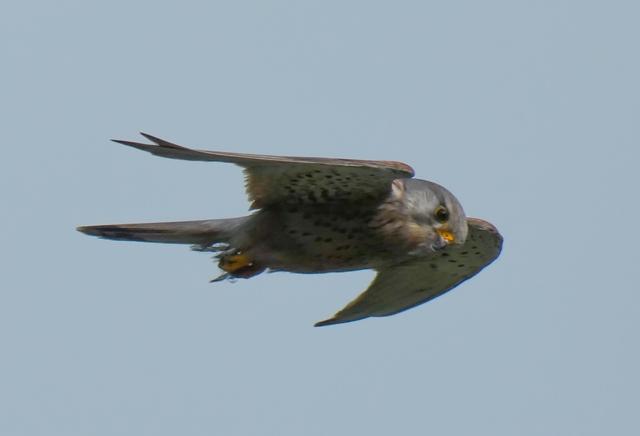 Exmoor bird id birdwatching Exmoor Identify moorland birds