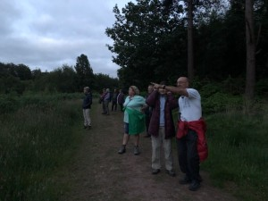 guided walk for group with nightjars
