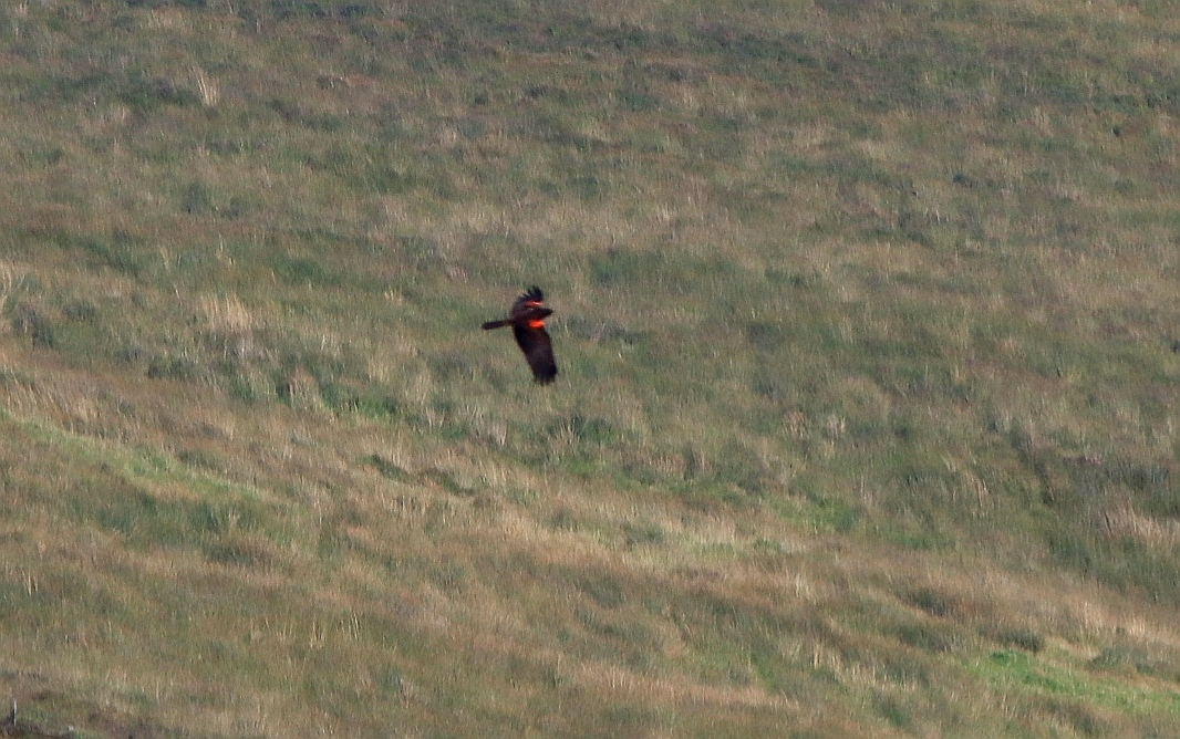 strange bird on Exmoor